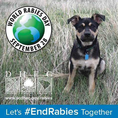 Let's #EndRabies Together