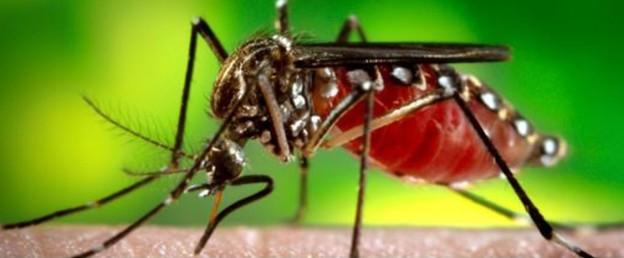 ZikaForumPicture (2)